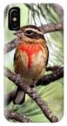 Rose-breasted Grosbeak On Pine Tree IPhone Case