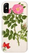 Rose Eglanteria IPhone Case