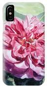 Watercolor Of A Pink Rose In Full Bloom Dedicated To Van Gogh IPhone Case
