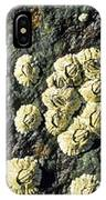 Rough Barnacles IPhone Case