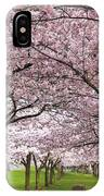 Rows Of Cherry Blossom Trees In Bloom IPhone Case