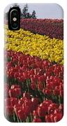 Rows Of Multicolored Tulips In Field Mount Vernon Washington Sta IPhone Case