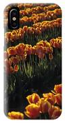 Rows Of Orange Tulips In Field Mount Vernon Washington State Usa IPhone Case