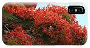 Royal Poinciana Branch IPhone Case