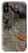 Sally Lightfoot Crabs And Marine IPhone Case