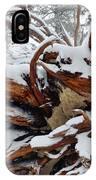 San Jacinto Fallen Tree IPhone Case
