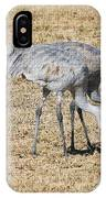 Sand Hill Cranes Eat Togeather IPhone Case