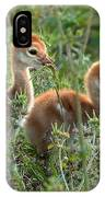 Sandhill Chicks IPhone Case