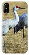 Sandhill Crane Pair IPhone Case