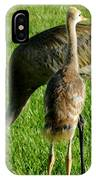 Sandhill Crane With Chick II IPhone Case