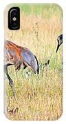 Sandhill Cranes Ll IPhone Case