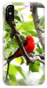 Scarlet Tanager - 11 IPhone Case