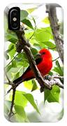 Scarlet Tanager - 19 IPhone Case