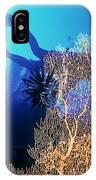 Sea Fans 2 IPhone Case