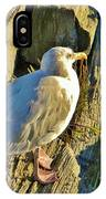Seagull In Shadow IPhone Case