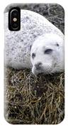 Seal Resting In Dunvegan Loch IPhone Case