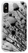 Seedheads IPhone Case