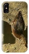 Shadows Of A Mallard Duck IPhone Case
