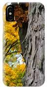 Shagbark Hickory Tree IPhone Case