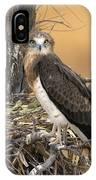 Short-toed Snake Eagle Circaetus Gallicus IPhone Case