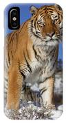 Siberian Tiger No. 1 IPhone Case