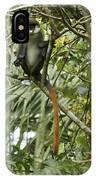 Silly Red-tailed Monkey IPhone Case