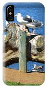 Sitting On A Log In The Bay IPhone Case