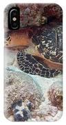 Sleeping Hawksbill Sea Turtle IPhone Case