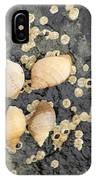 Snail Family Vacation IPhone Case