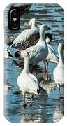 Snow Geese Discussion IPhone Case