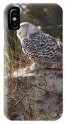 Snowy Owl In Florida 15 IPhone Case