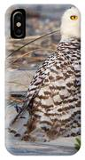 Snowy Owl In Florida 24 IPhone Case