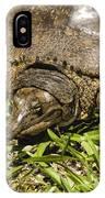 Florida Soft Shelled Turtle - Apalone Ferox IPhone Case