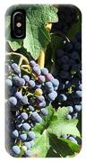 Sonoma Vineyards In The Sonoma California Wine Country 5d24630 Square IPhone Case