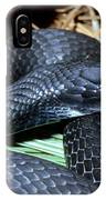 Southern Black Racer Coluber Priapus IPhone Case