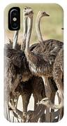 Southern Ostriches Performing Geophagia IPhone Case