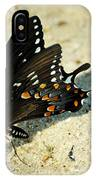 Spicebush Swallowtail Papilio Troilus  IPhone Case