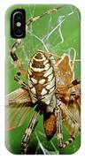 Spider Eating Moth IPhone Case