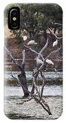 Spoonbill Gathering IPhone Case