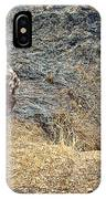 Spotted Hyena Pups In Kruger National Park-south Africa IPhone Case
