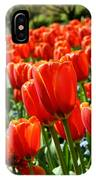 Spring Time Tulips 3 IPhone Case