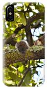 Squirrel On A Branch IPhone Case