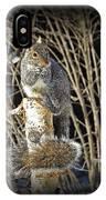 Squirrel On Birch Post IPhone Case