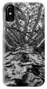 Squirrels View Looking Up IPhone Case