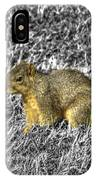 Squirrling Around Looking For Nuts IPhone Case