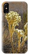 Staghorn Cholla Cactus Catching Sunlight In Joshua Tree Np-ca IPhone Case