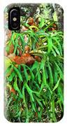 Staghorn Fresco IPhone Case