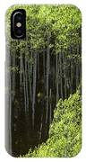 Stand Of Birch Trees New Growth Spring Rich Green Leaves IPhone Case