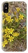 Star-of-bethlehem (gagea Peduncularis) IPhone Case
