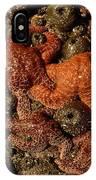 Starfish Low Tide Cape Sebastian Oregon Coast IPhone Case